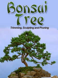 How Would You Like to Learn The Exciting  Art Of Bonsai? 1